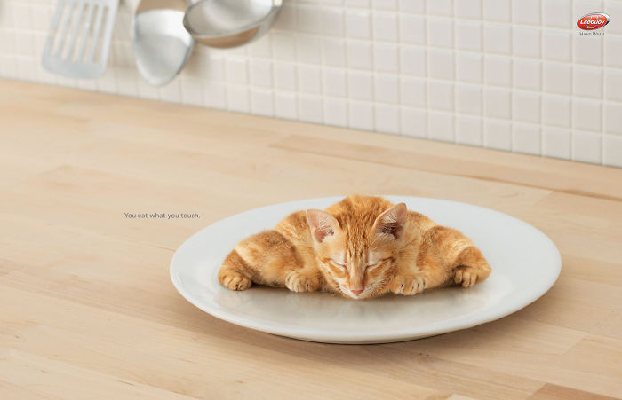 funny-ads-with-animals-12