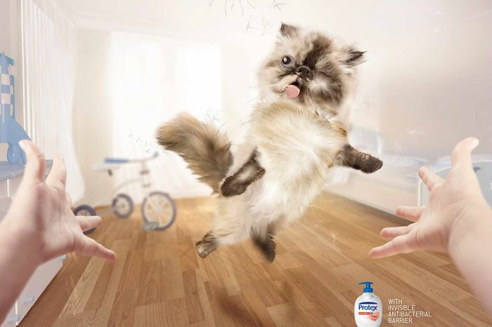 funny-ads-with-animals-13