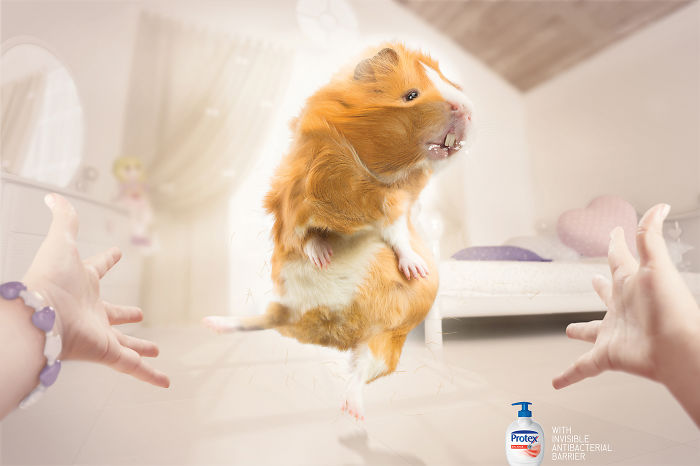 funny-ads-with-animals-14