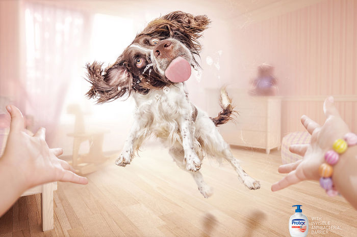 funny-ads-with-animals-15