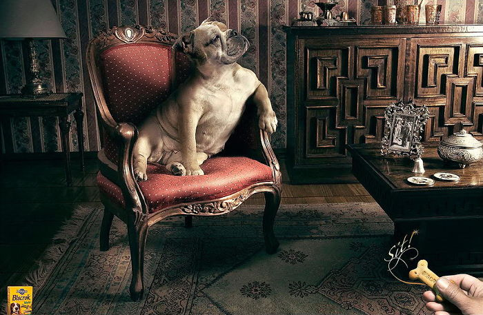 funny-ads-with-animals-27
