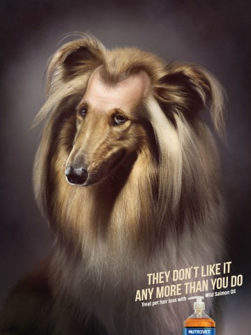 funny-ads-with-animals-37
