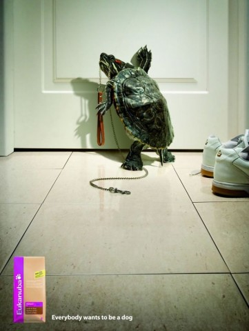 funny-ads-with-animals-52