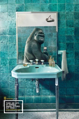 funny-ads-with-animals-6