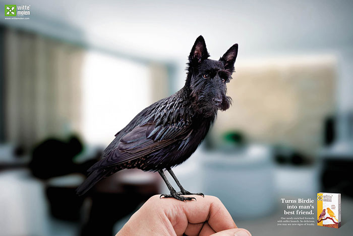 funny-ads-with-animals-74