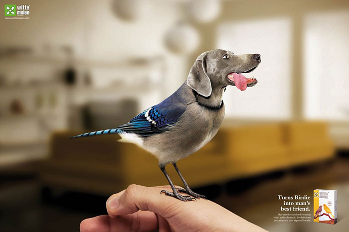 funny-ads-with-animals-75