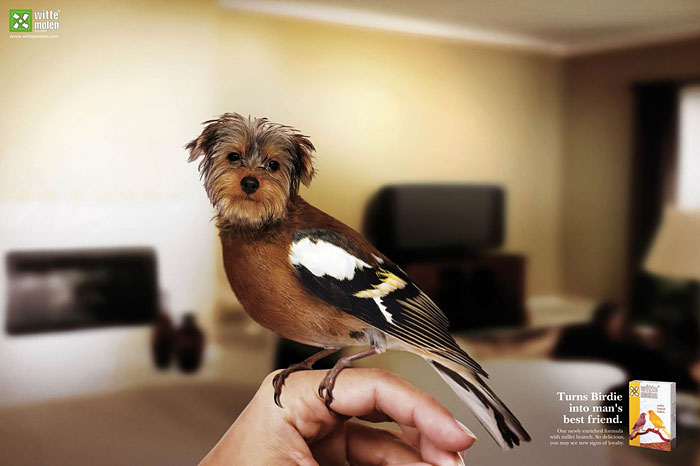 funny-ads-with-animals-76