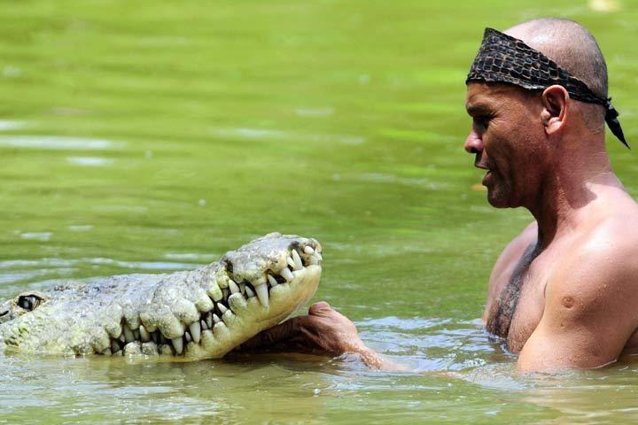 Kad drosmīgais zvejnieks pirmoreiz iegāja ūdenī kopā ar krokodilu, visi šausmās aizturēja elpu, taču nekas ļauns nenotika.