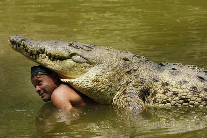 Čito iepeld ezerā un pasauc krokodilu, kurš, starp citu, ir viņa vienaudzis (Počo ir 50 gadus vecs), baro viņu un rotaļājas.