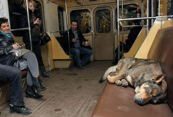 Suņi ir ļoti attapīgi, pat ja nav speciāli dresēti