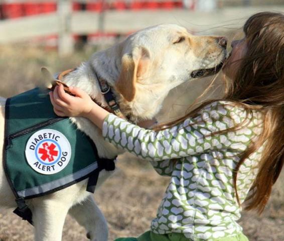 Suņi var sajust pat insulīna pazemināšanos