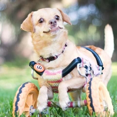 """""""Man šķiet, ka tieši drošsirdība ir tā, kas palīdz Deizijai skraidīt pa dzīvi uz mata tāpat, kā to dara suņi, kuriem nav invalīdu krēsla"""", – uzskata Šīna."""