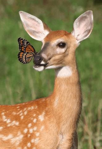 Dzīvnieku rotaļas ar taureņiem - Stirna un taureņi