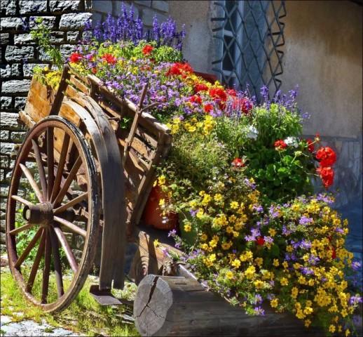 Oriģināla puķu dobe vecos ratos