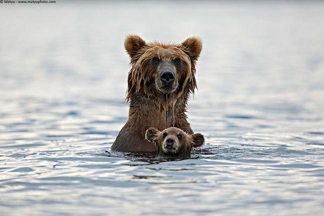 Lāču mamma, amatu savienošanas kārtībā arī peldēšanas instruktore