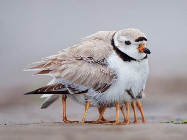 Šai putnu mammai, šķiet, ir svarīgi, lai bērni pagalmā nesaaukstētos