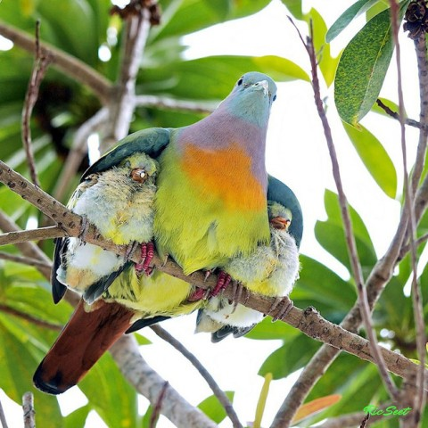 Mammai zem spārna ne no kā nav bail