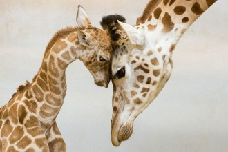Kurš gan vēl spēs mierināt, ja ne mamma