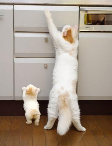 Tur augšā, dēls, vienmēr var atrast kādu gardu kumosiņu...