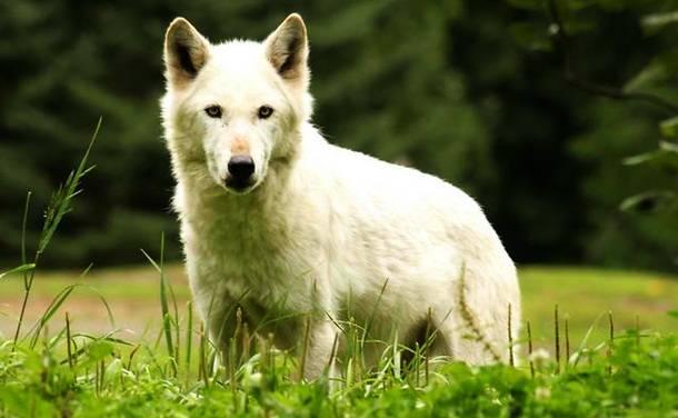 8. Suņu kodumi ir ļoti bīstami un ar bezatbildīgu saimnieku pat paši mīļākie sunīši var kļūt par asinskāru slepkavu.
