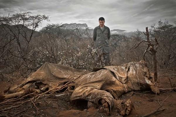 Beigts zilonis Kenijas ziemeļos, Āfrika