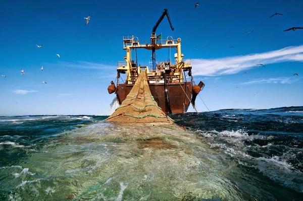 Mauritānijas piekrastē zivju drīz var aptrūkties, toties veikalos to būs gana