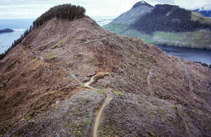 Kanāda, viss, kas palicis pāri pēc mežu izciršanas