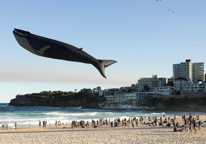 Pūķu laišanas festivāls Sidnejā, Austrālijā.