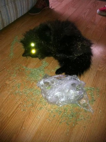 kaifu kaķim