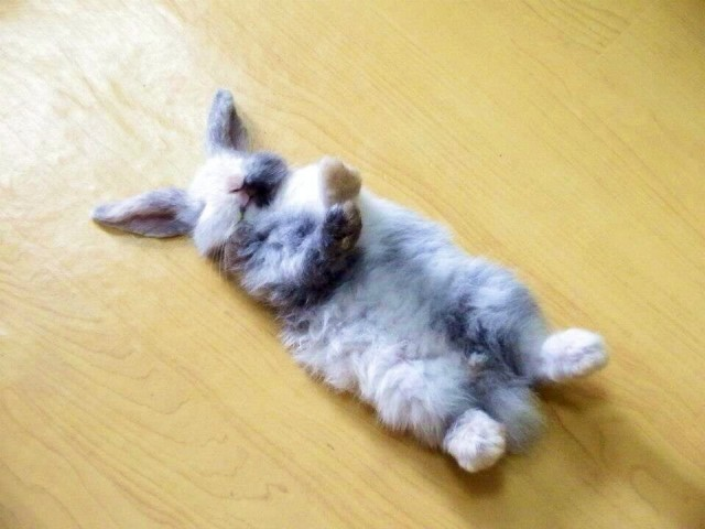 Kāpēc miegs tieši tagad šķiet tik salds?