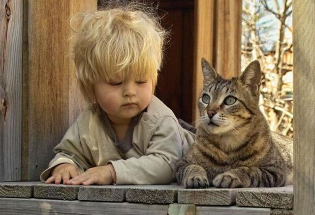 vai kaķi izraisa šizofrēniju