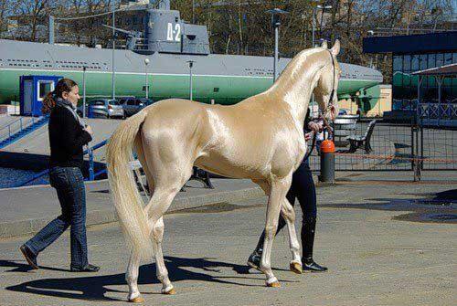 zirgu pasaules topmodelis
