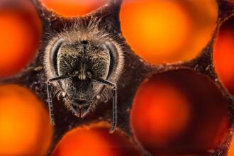 kā piedzimts bite
