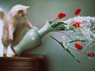 kaķi - atriebīgie maitas