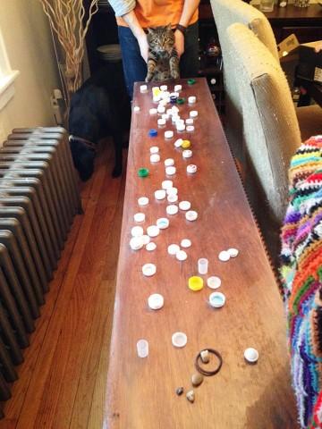 Šis kaķis čiepj plastmasas pudeļu vāciņus.