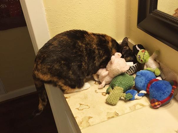 Sunim atņemtās rotaļlietas tiek akurāti saliktas līdzās personīgajam ēdiena trauciņam