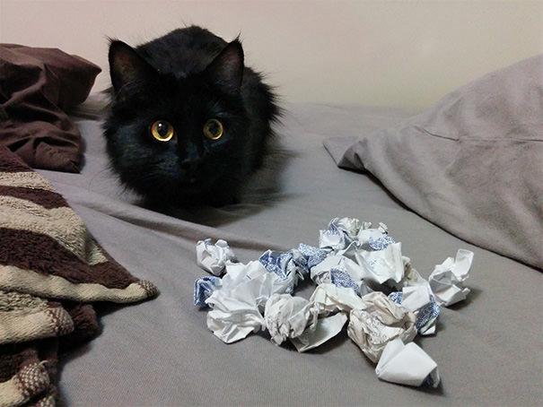 Melnā kaķēna sapņu darbs, šķiet, ir grāmatvedība, jo viņš rūpīgi vāc saburzītus čekus