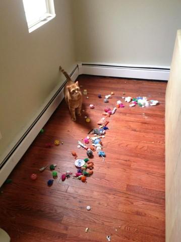 Visas kaķa rotaļlietas bija rūpīgi nogādātas aiz dīvāna