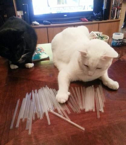 Baltu kaķi aizrauj balti salmiņi, krāsainie neder