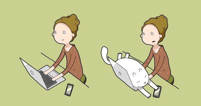 9. Kaķis parādīs, kas ir īsts komforts