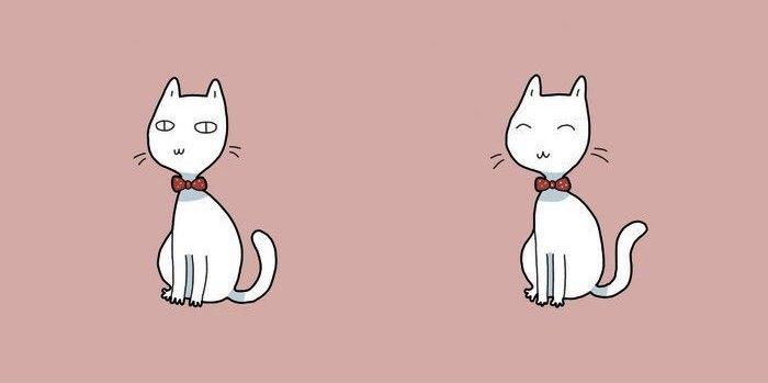 10. Kaķis iemācīs, kā sevi ir jāmīl