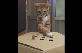"""kaķis spēlē """"Noķer pirkstu!"""""""