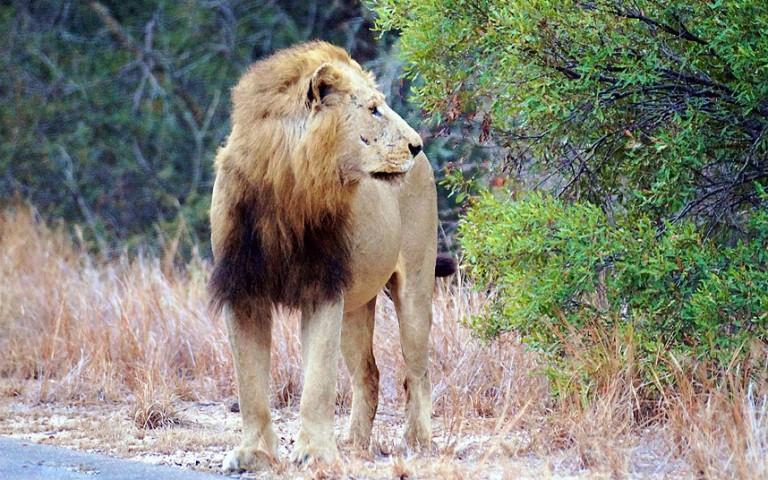 Nevienam vairs nebija prātā brīdinājumi par zvēru bīstamību, kaut gan  vēl tikai pirms mēneša Johanesburgas Lauvu parkā aizgāja bojā amerikāņu tūriste Ketrīna Čepela, kurai caur atvērto automašīnas logu uzbruka lauva.