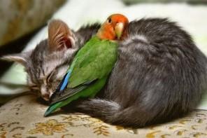 Mīlestībai nav robežu: šķietami neiespējami draugi dzīvnieku pasaulē