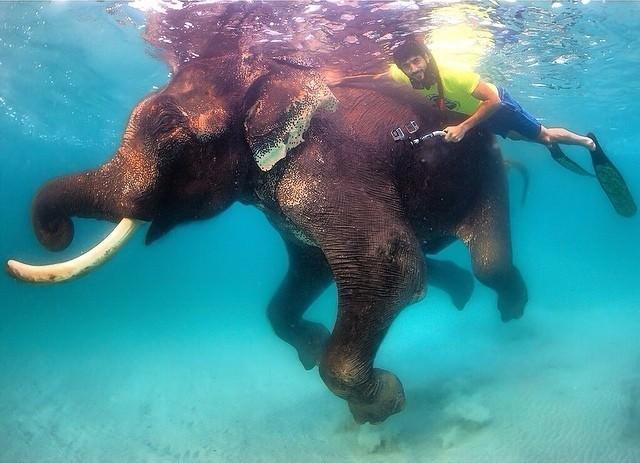 Šeihs Hamdans un pasaulē vienīgais peldošais zilonis Radžans