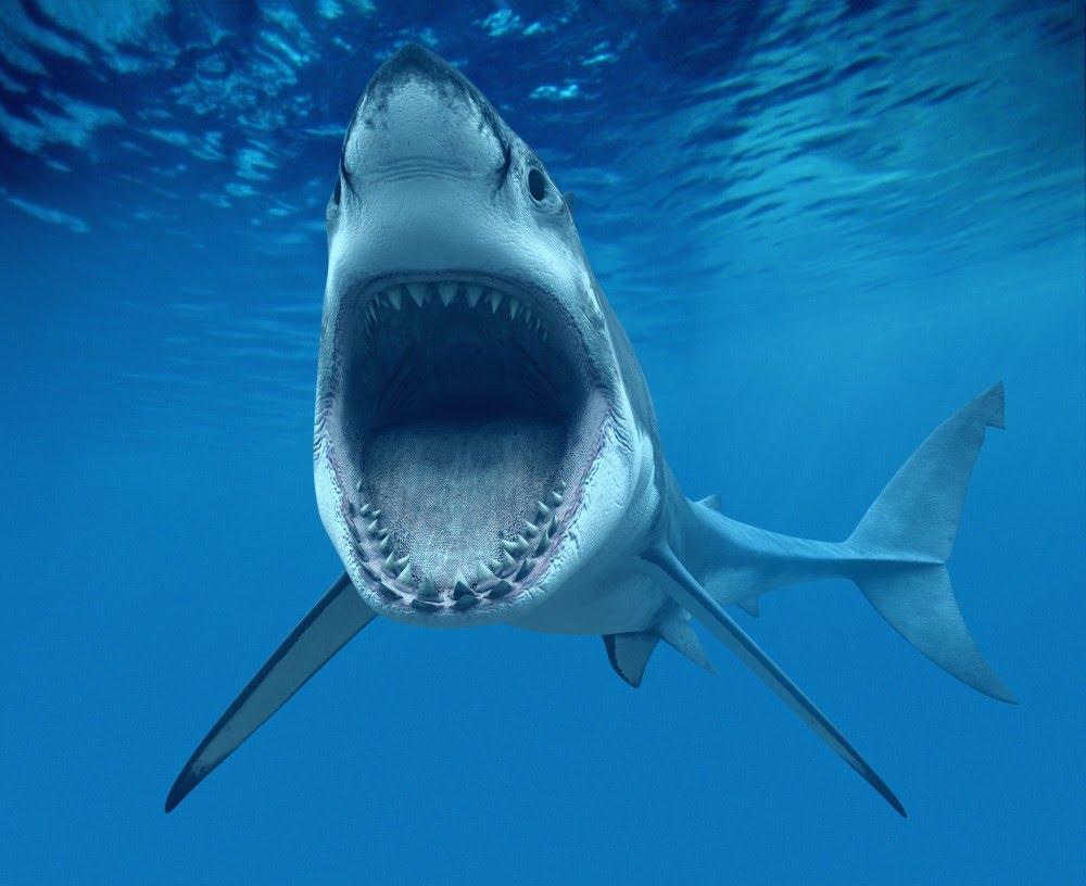 haizivis