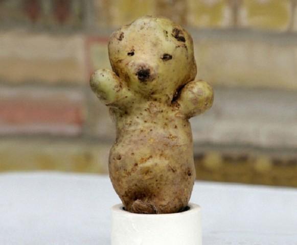 Kartupeļu lācītis Ķepainītis