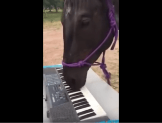 zirgs spēlē klavieres