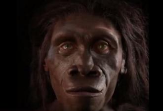 cilvēka sejas evolūcija