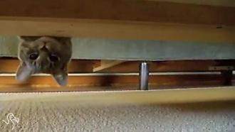 kaķi spiegi